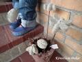 földbe tűzhető betonfigura, szitakötő, lepke, katica, méhecske, szürke, KÓD: BD 07