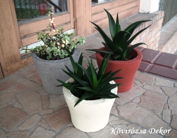 pozsgás növények könnyűbeton kaspóban