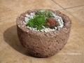 Kövirózsa ajándék könnyűbeton edényben, piros, 14 cm széles, 9 cm magas, alja zárt,, Kód: KA 05, 900 Ft/db