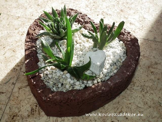 pozsgás növények szív alakú könnyűbeton formában