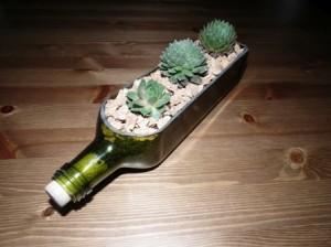 Ültessünk kövirózsát üvegbe!