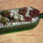 kövirózsák üvegben, succulent bottle