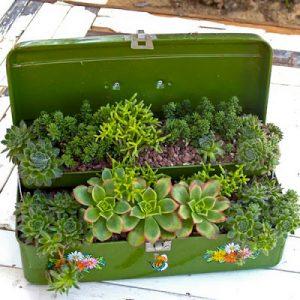 egyedi pozsgás ültetőedények