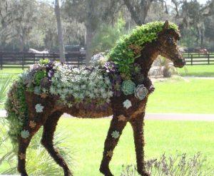 kövirózsa ló