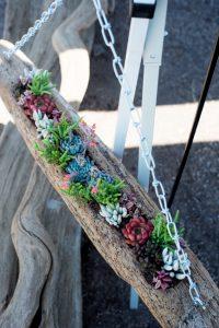 pozsgás dekoráció uszadékfán