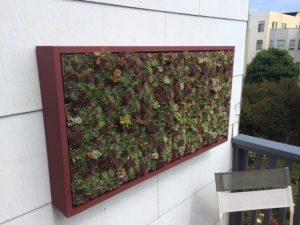 pozsgás növénytartó panel