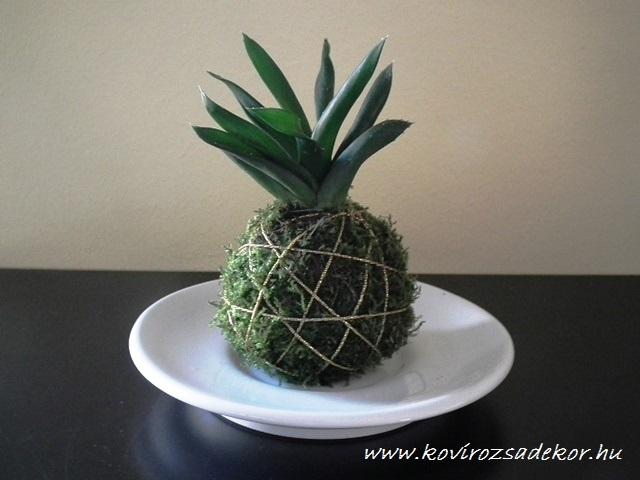 succulent kokedama