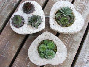 kövirózsák beton szív formában