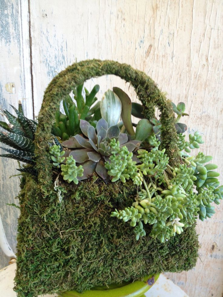 kövirózsa táska, succulent bag