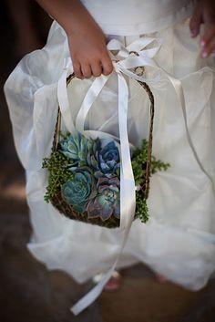 kövirózsa táska, succulent purse