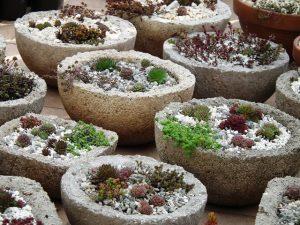 tőzegbeton, könnyűbeton edények kövirózsával és varjúhájjal