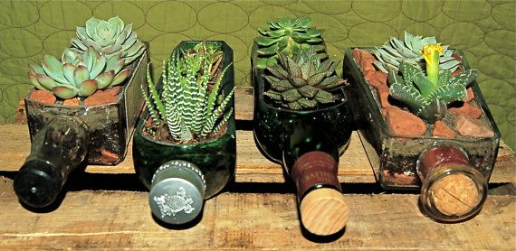 succulents in bottle
