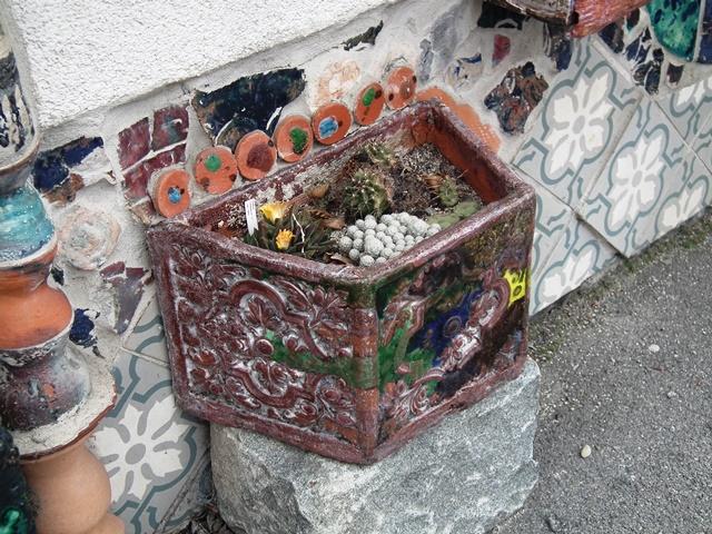 kaktuszok, succulents, Bécs