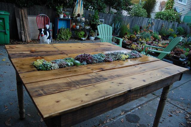DIY fa asztal pozsgásokkal beültetve