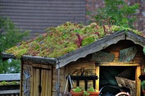 kövirózsa tető