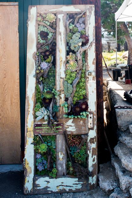 Peter Loyola pozsgás ajtója, Succulent Cafe