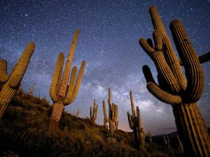 saguaro éjjel