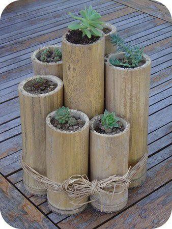bambuszcső pozsgásoknak