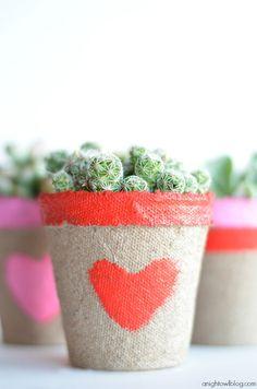 valentin napi kaktusz