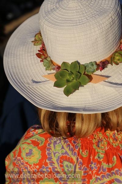kövirózsa kalap, succulent hat