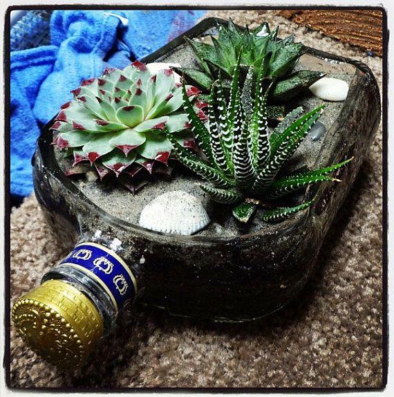 pozsgások üvegben, succulent in bottle