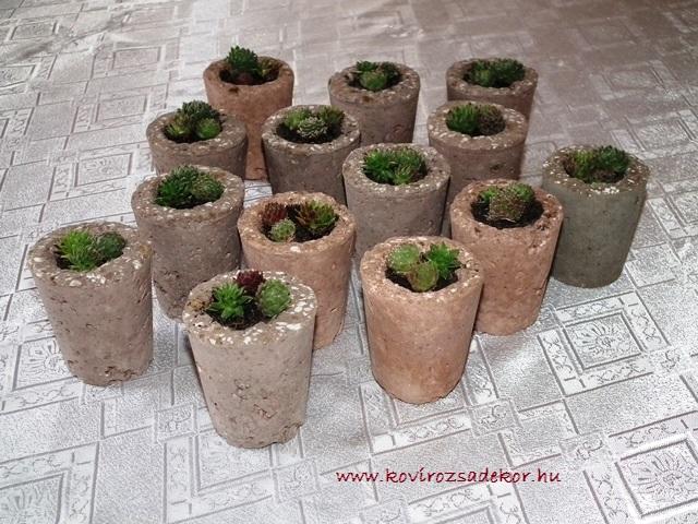 kövirózsa köszönetajándék esküvőre, wedding favour, succulentt
