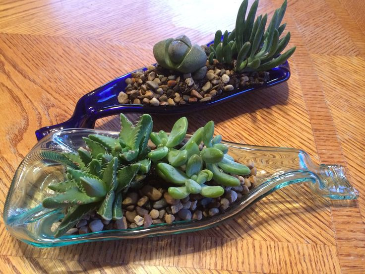 pozsgások üvegben, succulents in bottle