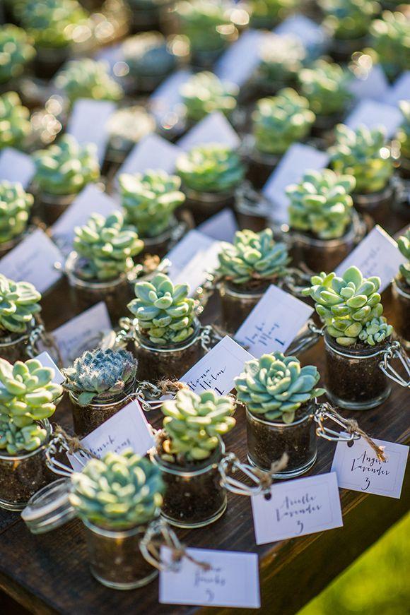 köszönetajándék esküvőre, wedding favour, succulent