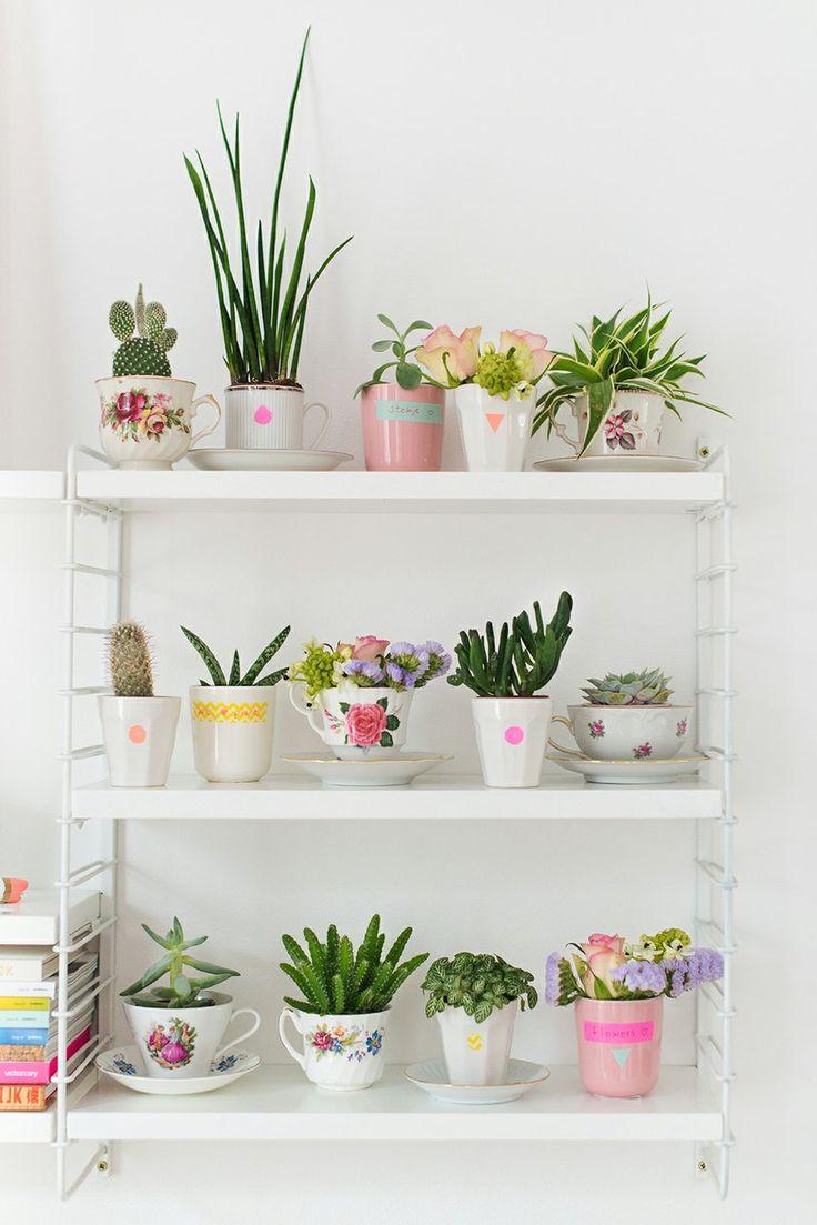 succulents in teapots, pozsgások teáscsészében