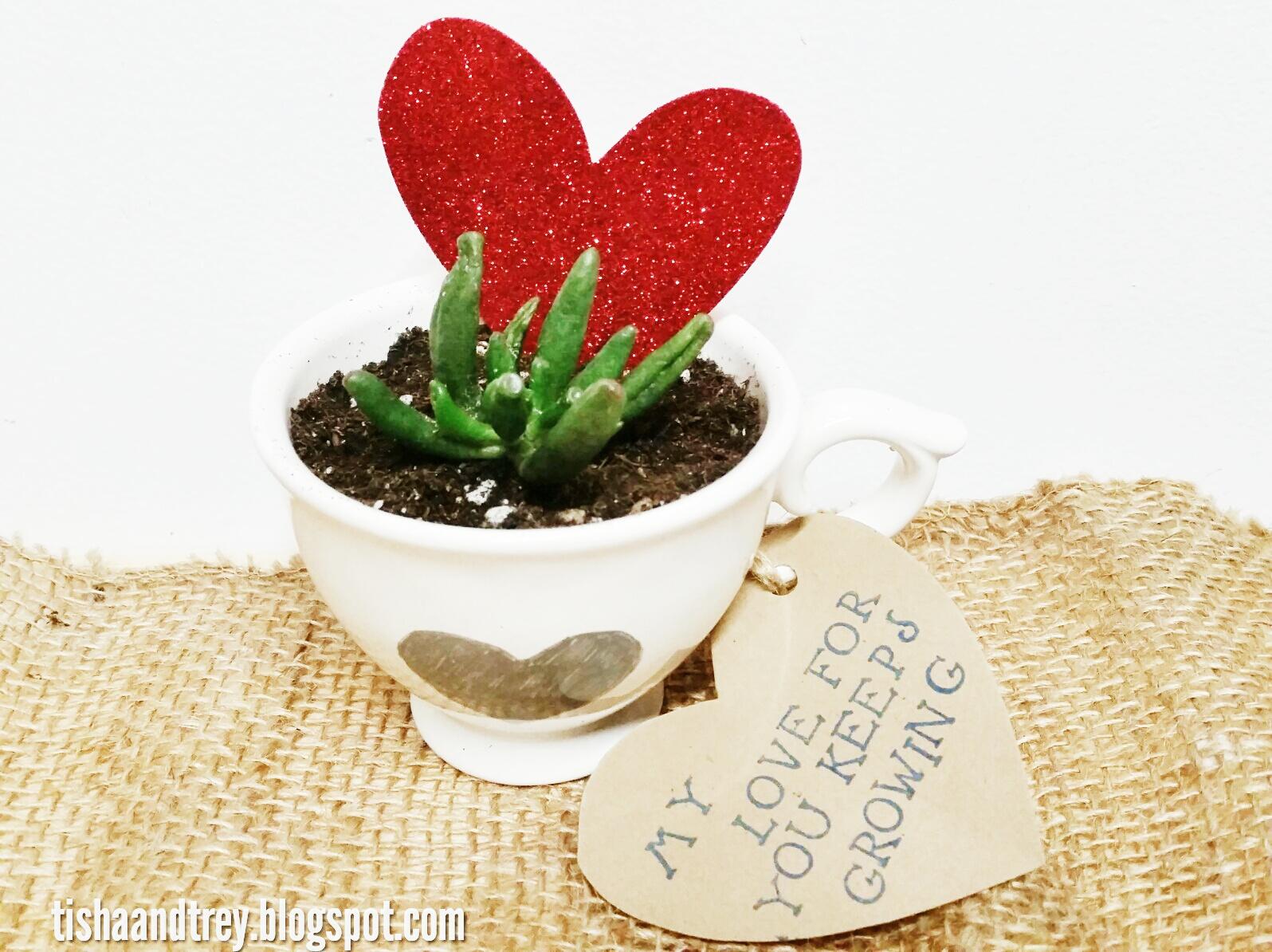 pozsgás növények Valentin-napra