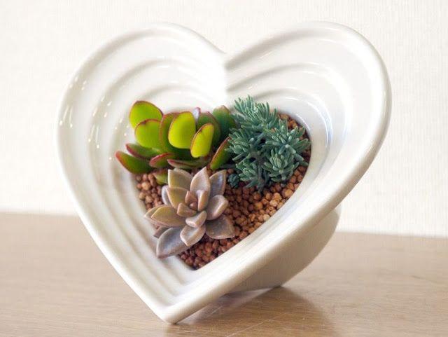 pozsgás ajándék Valentin-napra