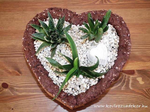 pozsgások Valentin-napra, succulents for Valentine's-day