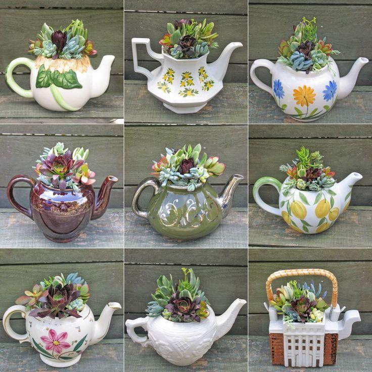 teapot, succulents, teásedény, pozsgások