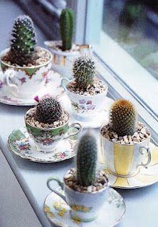 succulent teapot, pozsgások teáscsészében