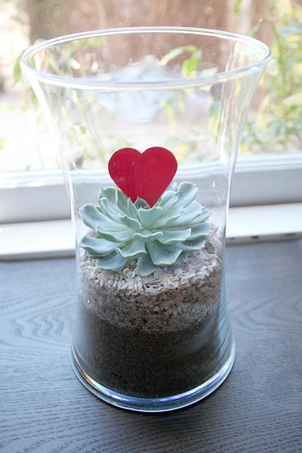 arium Valentin-napra, succulent terrariumulent terrarium