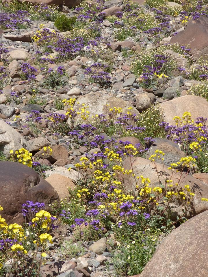 Death Valley, Halál Völgye